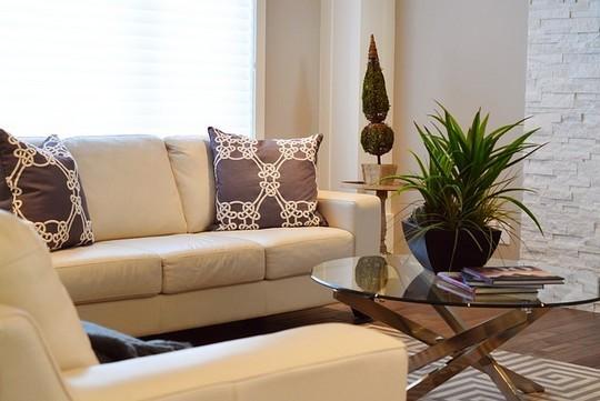 Nenarocne pokojove rostliny poslouzi jako svezi dekorace