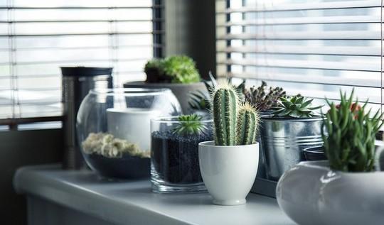 Odolne kaktusy a sukulenty vytvori kouzelne zatisi