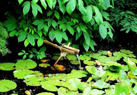biotop - vodni plocha v zahrade