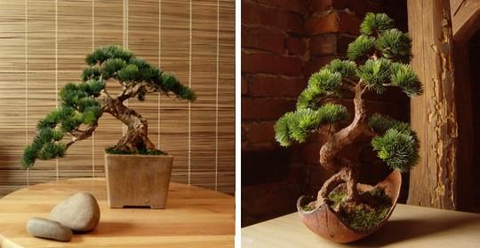 umele bonsaie