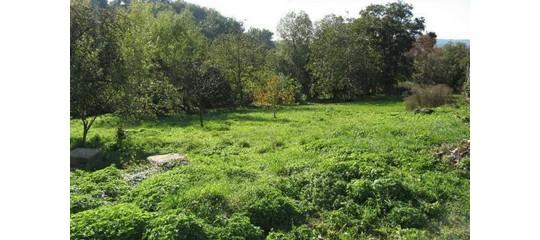 Koupe pozemku predstavuje vyhodnou a bezrizikovou investici.